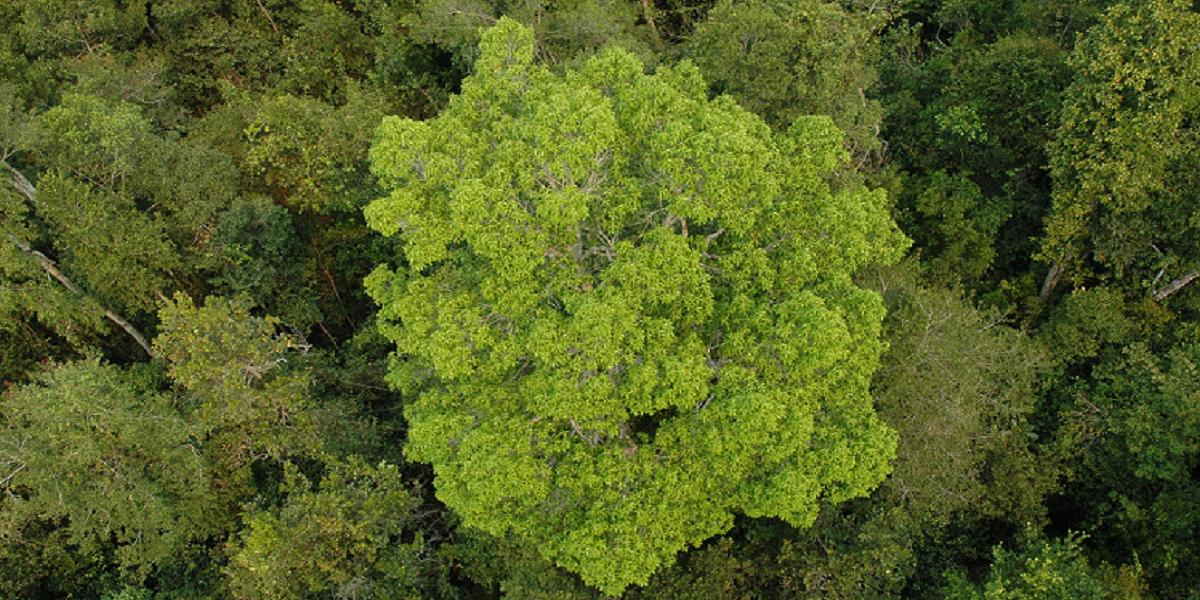 インドネシア ボルネオ島 セバンガウ国立公園