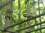 ブナ林にデンドロメーターを設置
