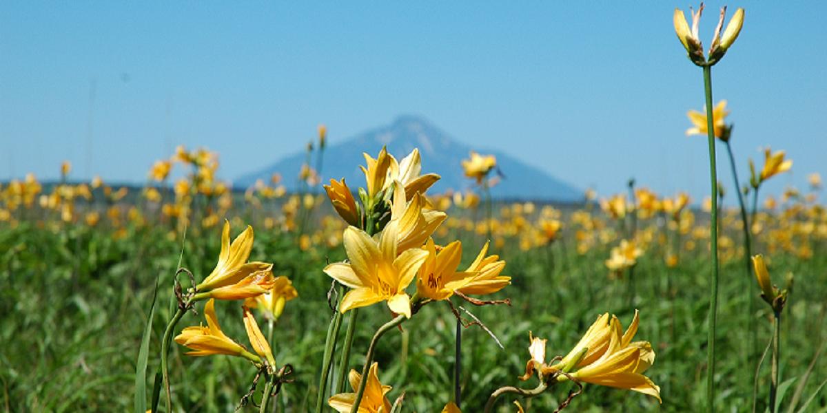北海道 サロベツ原野