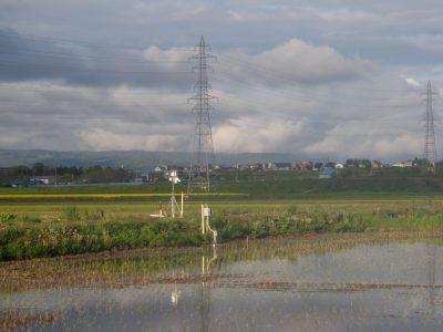 水田に設置した水位計と気象観測装置