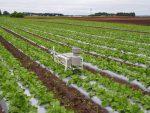 大根畑連続観測/精密強制通風式温湿度計・土壌水分計・地温・雨量計